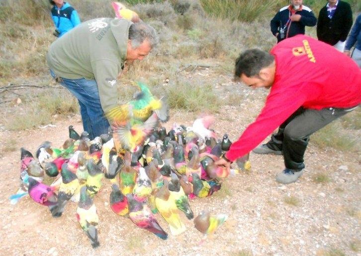 La Alcaldía elabora un bando sobre la práctica deportiva de colombicultura en el municipio de Totana para la temporada 2017/2018