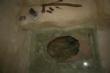 Vídeo. La réplica de la Casa Argárica impulsará el yacimiento arqueológico de La Bastida y permitirá que los visitantes del poblado comprendan mejor el estilo de vida de la Edad de Bronce - Foto 27