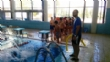 """Un total de 339 escolares de sexto curso de Educación Primaria participan en la II Jornada Acuática, organizada por la Concejalía de Deportes y el Centro Deportivo """"MOVE"""" - Foto 6"""