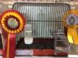 """Vídeo. Totana acoge hasta el próximo 4 de noviembre el 6° Campeonato Ornitológico Regional Murciano en el Pabellón """"Padres Capuchinos"""" del Polideportivo Municipal """"6 de Diciembre - Foto 32"""
