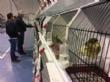 """Vídeo. Totana acoge hasta el próximo 4 de noviembre el 6° Campeonato Ornitológico Regional Murciano en el Pabellón """"Padres Capuchinos"""" del Polideportivo Municipal """"6 de Diciembre - Foto 39"""