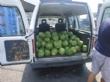 Agricultores y cooperativas de Totana entregan fruta fresca a Cáritas de las Tres Avemarías gracias a las gestiones del concejal de Bienestar Social - Foto 1
