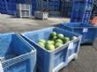 Agricultores y cooperativas de Totana entregan fruta fresca a Cáritas de las Tres Avemarías gracias a las gestiones del concejal de Bienestar Social - Foto 2