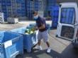 Agricultores y cooperativas de Totana entregan fruta fresca a Cáritas de las Tres Avemarías gracias a las gestiones del concejal de Bienestar Social - Foto 4